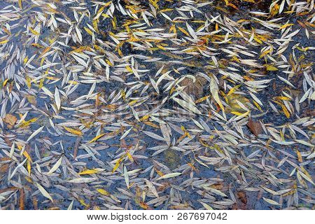 Natural Texture Of Colored Fallen Leaves In The Lake Water