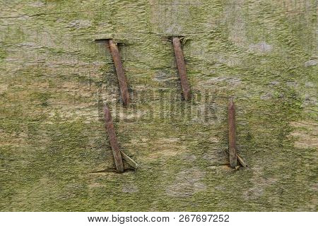 Gray Wooden Board With Hammered Bent Rusty Nails