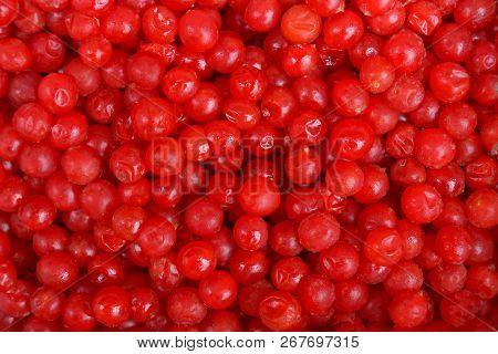 Natural Texture Of Small Red Berries Of Viburnum