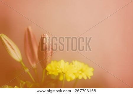 Bouquet Of Lilies And Yellow Chrysanthemums, With A Peach Pink Background