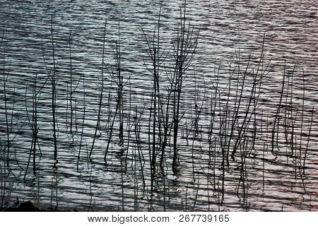 Rest On The Shore Of The Reservoir. Beautiful Water Landscape In Nature In The Forest. Calm Lake On