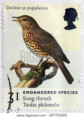 Luga, Russia - May 14, 2017: A Stamp Printed By Great Britain Shows Song Thrush That Breeds Across M