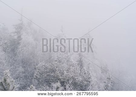 white background, landscape - snow-capped peaks of trees, barely visible in the frosty haze poster