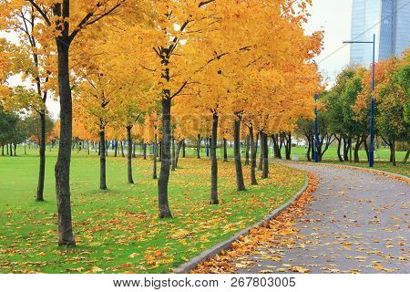 Autumn Park Alley And Colorful Orange Trees On Fall Season Day With No People. Cozy Park Road And Wa