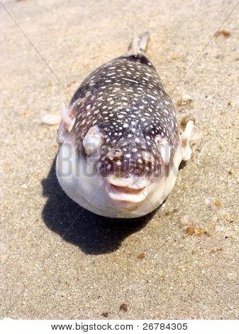 Dead fish on a seashore