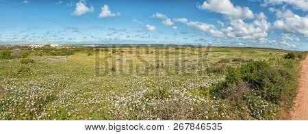 Wild Flower Panorama At Postberg Near Langebaan On The Atlantic Ocean Coast In The Western Cape Prov