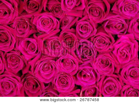pinkrose background ,natural texture