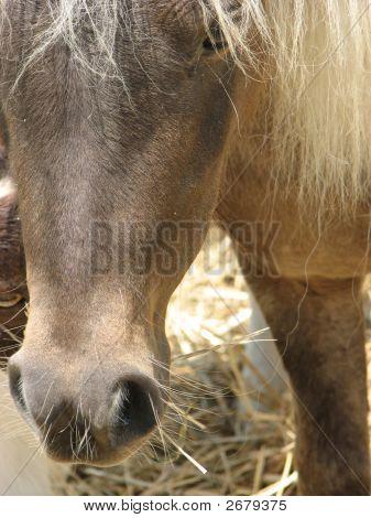 Pony Closeup