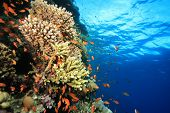 Coral Reef and Turquoise water poster