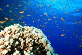 Coral Reef and Tropical Fish poster