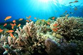 Coral Reef in Sunlight poster