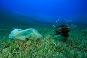 Environmental problem - plastic bag in the ocean with Lionfish poster