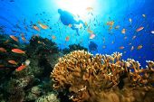 Scuba Diving on a coral reef with tropical fish poster