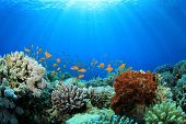 Coral Reef and Tropical Fish in Sunlight poster
