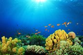 Tropical Fish and Coral Reef in Sunlight poster