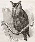Great Horned-owl old illustration (Bubo virginianus), also known as Tiger Owl. Created by Kretschmer and Jahrmargt, published on Merveilles de la Nature, Bailliere et fils, Paris, 1878 poster