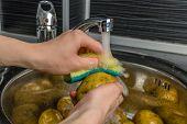 Wash vegetables under running water. Mans hands washing raw potatoes. poster