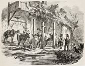 Farmers shoeing oxen old illustration. Created by De Buysson, published on L'Illustration, Journal Universel, Paris, 1858 poster