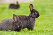 A group of bunny rabbits on grass. Shallow depth of field. Focus on the central rabbit. poster