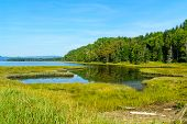 Landscape of forest and pools in the Penouille sector of Forillon National Park, Gaspe Peninsula, Quebec, Canada poster