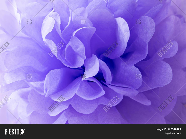 Beautiful Lavender Image Photo Free Trial Bigstock