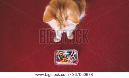Giving Pills To Cats, Pilling Your Pet. How-to Give A Cat A Pill Tutorial. Cat And Many Pills On A R