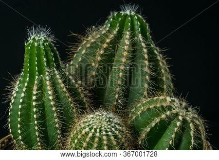 Homemade prickly cactus close-up fragment