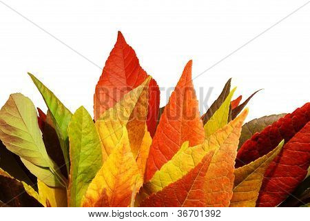 Fall Leaves Against A White Wall