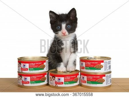 Alameda, Ca - May 15, 2020: Adorable Black And White Tuxedo Kitten Standing On Can Of Science Diet L