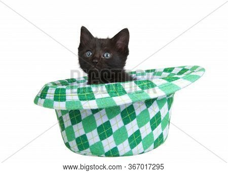 One Black Kitten Sitting In A Saint Patricks Day Themed Green Checkered Fedora Style Hat, Isolated O