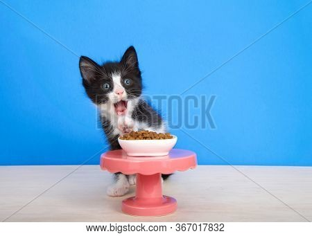 Small Black And White Tuxedo Kitten Sitting On A Wood Floor Behind A Small Pedestal Table With A Tin