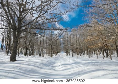 snow covered path crosses winter forest in Nebrodi Mountains natural landmark of Sicily