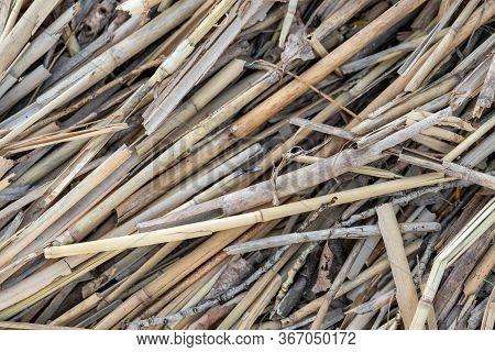 Close-up Dry Aged Reed Texture Background. Bamboo Cane Autumn Hunting Camouflage Pattern. Detail Of
