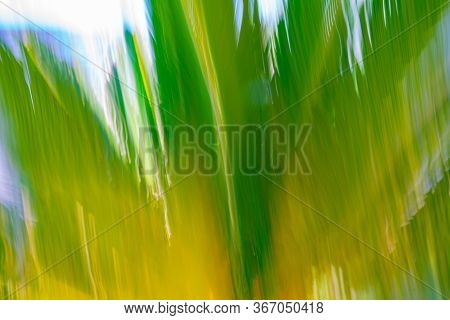Cycad Frond Background Motion Blur Green And Yellow Abstract