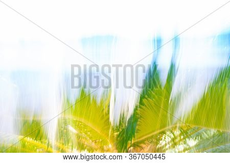Cycad Frond Background Motion Blur Nature Image