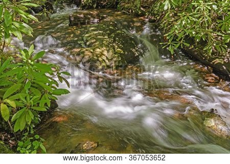 Hidden Stream Amongst The Rhododendrons Along The Blue Ridge Parkway In North Carolina