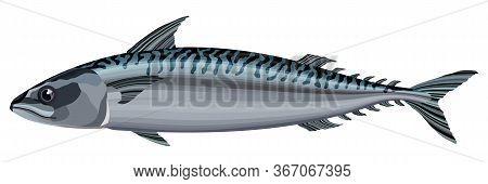 Mackerel Fish On White Background Vector Illustration