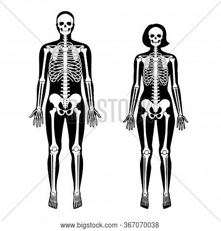 Woman And Man Skeleton Anatomy In Front View. Vector Black Isolated Flat Illustration Of Human Skull