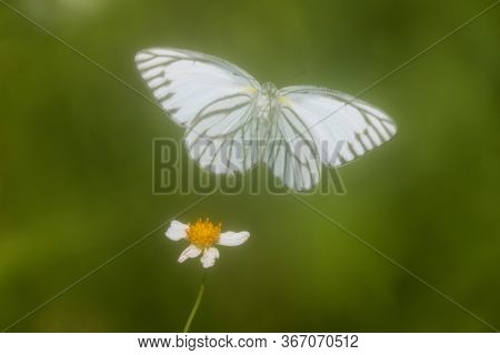 White butterfly flying and yellow flower on green background