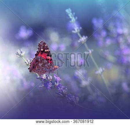 Beautiful Violet Nature Background.Floral Art Design.Macro Photography.Floral abstract pastel background with copy space.Butterfly and Lavender Field.Butterfly in Summer Floral Background.Beautiful Butterfly on a Flower.Creative Artistic Wallpaper.
