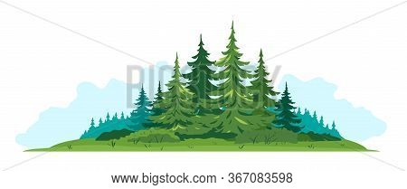 Composition Of Spruce Forest With Big Green Spruce Trees In Front View Isolated, Green Dense Spruce
