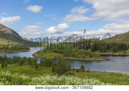 Lofoten Summer Landscape Lofoten Is An Archipelago In The County Of Nordland, Norway. Is Known For A