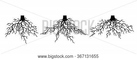 Collection Strong Plant Roots Silhouette. Abstract Felled Tree With Root. Tree With Lush Root