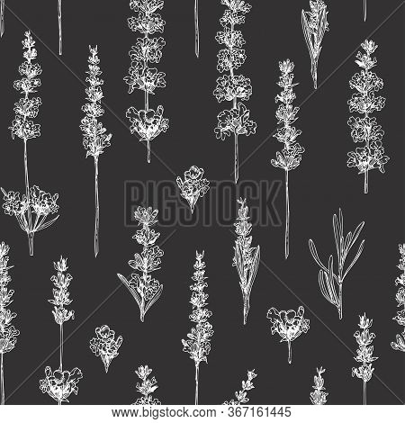 Semless Pattern With Hand Drawn Sketch Of Cute Lavender Flower Isolated On Chalkboard Background. Fr