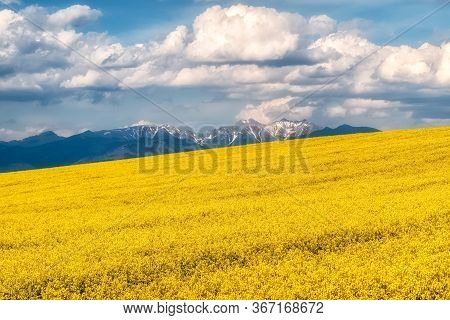 Rapeseed Field And Rural Country. West Tatras Mountains At Background.. Clouds On Thy Blue Sky