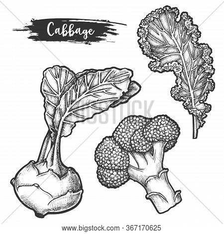 Set Of Isolated Sketch Of Cauliflower Root, Fetus