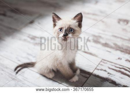 Kitten on floor. Little cut cat at home