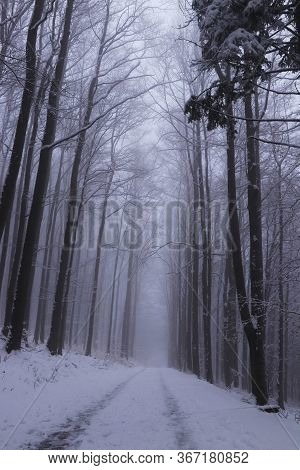 Forest Path Under Snow Cover With A Magical And Dark Atmosphere That Leads To The Top Of The Prasiva