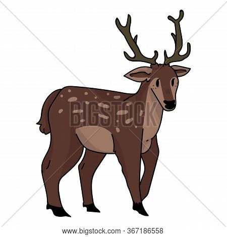 Cute Woodland Stag Deer Vector Illustration. Buck Deer With Antlers. Childlish Hand Drawn Doodle Sty