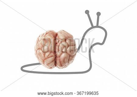 Slow Human Brain - Snail Isolated On A White Background. Stupid, Slow And Difficult Learning.